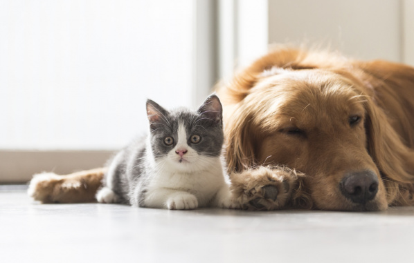Vital Pet Vaccinations, puppy, kitten, dogs and cats